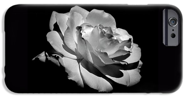 Botanical Photographs iPhone Cases - Rose iPhone Case by Rona Black