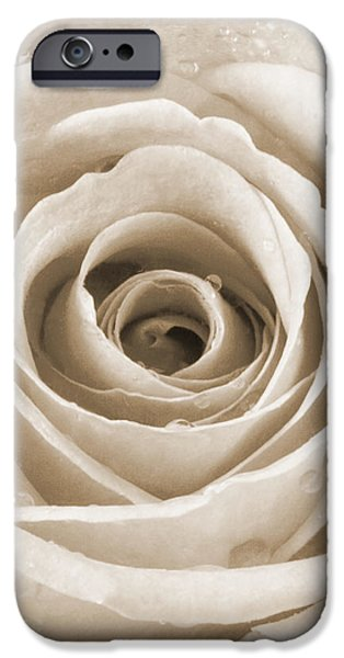 Rose with Water Droplets - Sepia iPhone Case by Natalie Kinnear