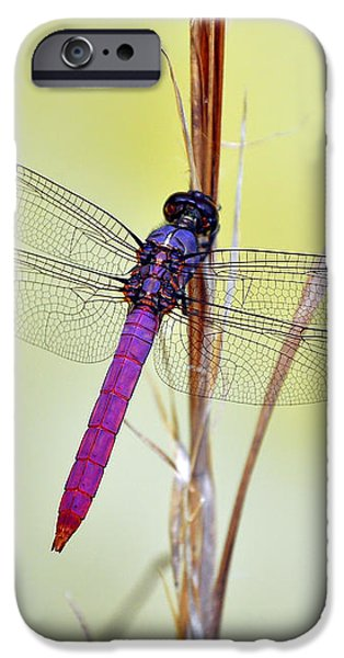 Roseate Skimmer Dragonfly iPhone Case by Al Powell Photography USA