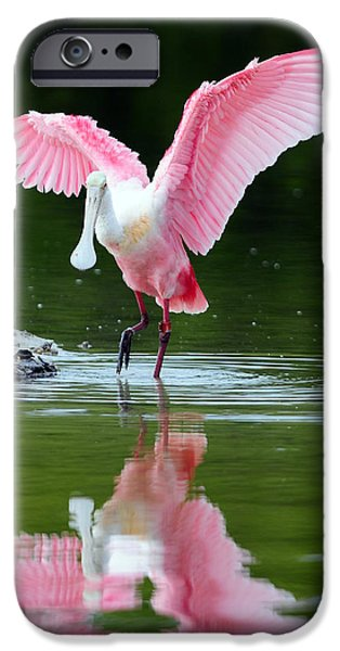 Spoonbill iPhone Cases - Roseate Spoonbill iPhone Case by Clint Buhler
