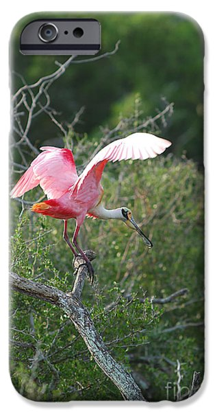 Spoonbill iPhone Cases - Roseate Spoonbill iPhone Case by Gregory G. Dimijian