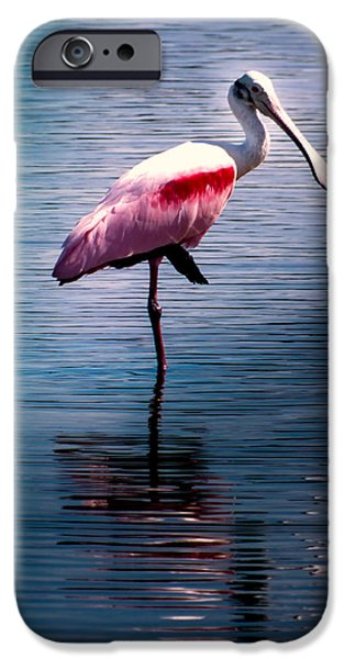 Spoonbill iPhone Cases - Roseate Spoonbill iPhone Case by Karen Wiles