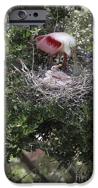 Spoonbill iPhone Cases - Roseate Spoonbill Nest iPhone Case by Gregory G. Dimijian