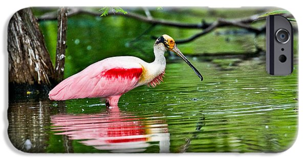 Recently Sold -  - Fauna iPhone Cases - Roseate Spoonbill Wading iPhone Case by Anthony Mercieca