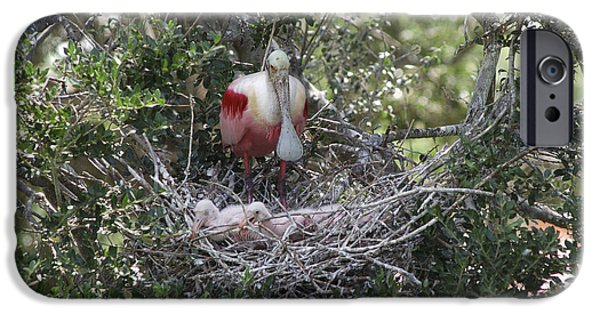 Spoonbill iPhone Cases - Roseate Spoonbill With Chicks iPhone Case by Gregory G. Dimijian