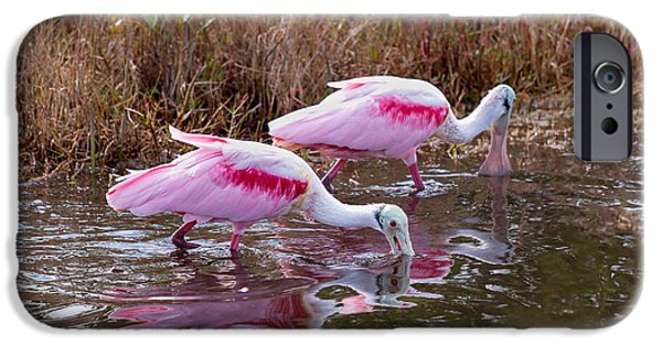Wild Animals iPhone Cases - Roseate Spoonbills Swishing for Food iPhone Case by John Bailey