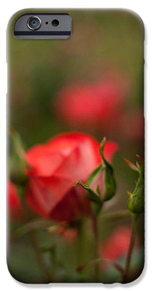 Floribunda iPhone Cases - Rosehip Edge iPhone Case by Mike Reid