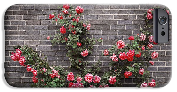 Flora Photographs iPhone Cases - Roses on brick wall iPhone Case by Elena Elisseeva