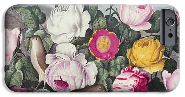 Nest iPhone Cases - Roses iPhone Case by Robert Thornton