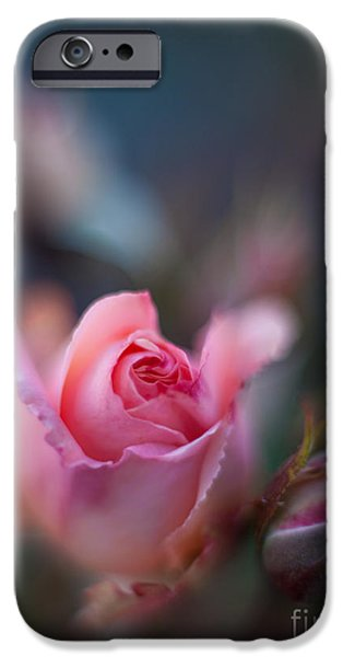 Poetic Photographs iPhone Cases - Roses Scented Dream iPhone Case by Mike Reid