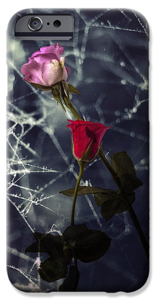 Rose iPhone Cases - Roses With Coweb iPhone Case by Joana Kruse