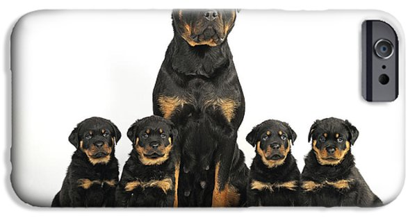 Rottweiler Puppy iPhone Cases - Rottweiler Dog And Puppies iPhone Case by John Daniels