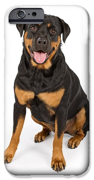 Rottweiler iPhone Cases - Rottweiler Dog Isolated on White iPhone Case by Susan  Schmitz