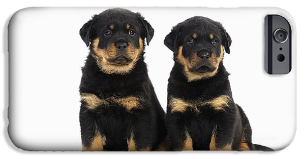 Puppies iPhone Cases - Rottweiler Puppy Dogs iPhone Case by John Daniels