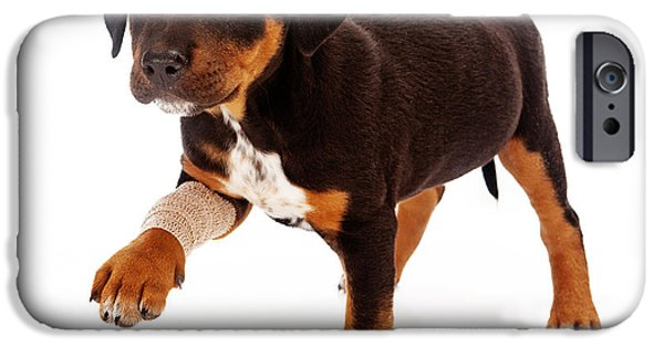 Rottweiler iPhone Cases - Rottweiler Puppy Injured Paw iPhone Case by Susan  Schmitz