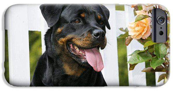 Dog Close-up iPhone Cases - Rottweiler Sitting By Fence iPhone Case by John Daniels