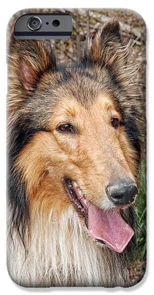 Snake iPhone Cases - Rough Collie iPhone Case by Kenny Francis