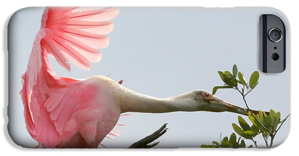 Spoonbill iPhone Cases - Rough Landing iPhone Case by Carol Groenen