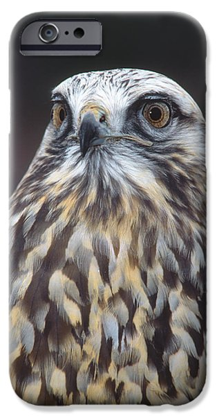 New Individuals iPhone Cases - Rough-legged Hawk In Light Phase Vermont iPhone Case by Tom Vezo