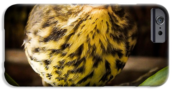 Baby Bird iPhone Cases - Round Warbler iPhone Case by Karen Wiles