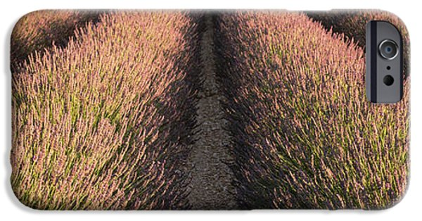 Covering Up iPhone Cases - Rows Lavender Field, Pays De Sault iPhone Case by Panoramic Images