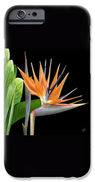 Royal Beauty I - Bird Of Paradise iPhone Case by Ben and Raisa Gertsberg