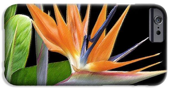 Botanical Photographs iPhone Cases - Royal Beauty I - Bird Of Paradise iPhone Case by Ben and Raisa Gertsberg