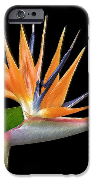 Best Sellers -  - Floral Digital Art Digital Art iPhone Cases - Royal Beauty I - Bird Of Paradise iPhone Case by Ben and Raisa Gertsberg