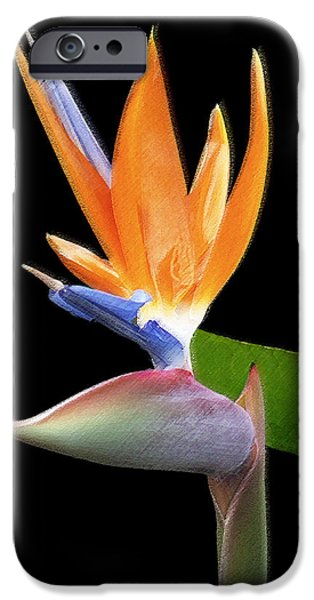 Best Sellers -  - Floral Digital Art Digital Art iPhone Cases - Royal Beauty II - Bird Of Paradise iPhone Case by Ben and Raisa Gertsberg