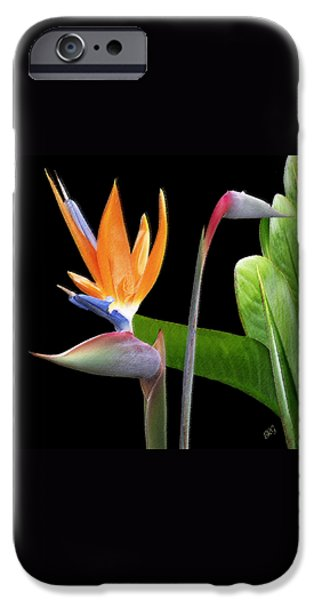 Brg iPhone Cases - Royal Beauty II - Bird Of Paradise iPhone Case by Ben and Raisa Gertsberg