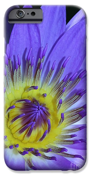 Botanical Photographs iPhone Cases - Royal Purple Water Lily #11 iPhone Case by Judy Whitton