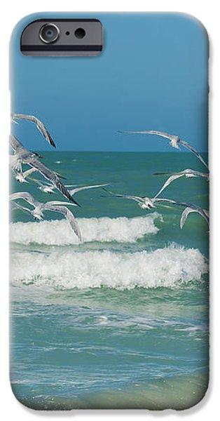 Royal Tern Frenzy iPhone Case by Kim Hojnacki