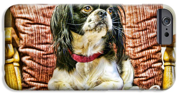Japanese Chin Puppy iPhone Cases - Royalty - Japanese Spaniel iPhone Case by Cricket Hackmann