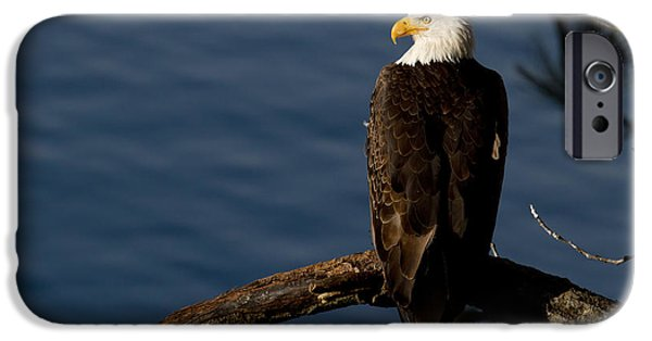 Eagle iPhone Cases - Royalty iPhone Case by Reflective Moment Photography And Digital Art Images