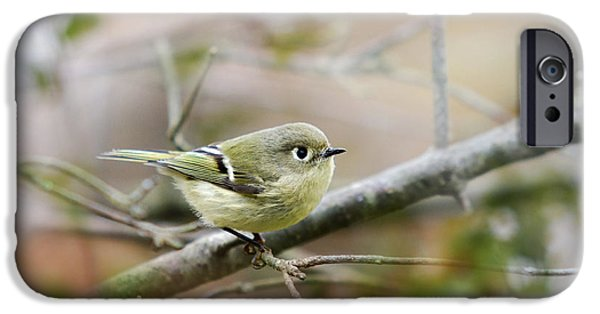Warbler iPhone Cases - Ruby-Crowned Kinglet iPhone Case by Christina Rollo