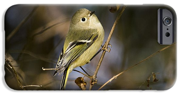 Baby Bird Pyrography iPhone Cases - Ruby-crowned Kinglet iPhone Case by Michael Bennett