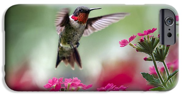 Close-up Photographs iPhone Cases - Ruby Garden Jewel iPhone Case by Christina Rollo