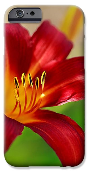 Ruby Red iPhone Case by Reflective Moment Photography And Digital Art Images