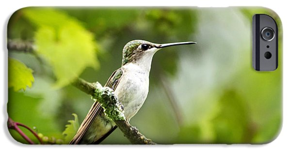 Archilochus Colubris iPhone Cases - Ruby-Throated Hummingbird-1 iPhone Case by Christina Rollo