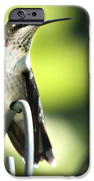 Ruby-Throated Hummingbird iPhone Case by Christina Rollo