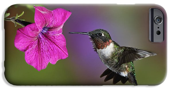Archilochus Colubris iPhone Cases - Ruby-throated Hummingbird - D004190 iPhone Case by Daniel Dempster