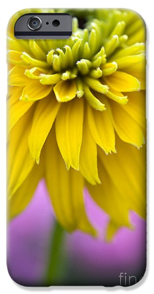 Abstracted Coneflowers iPhone Cases - Rudbeckia Cherokee Sunset Flower iPhone Case by Tim Gainey