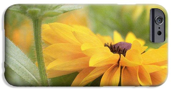 Kim Photographs iPhone Cases - Rudbeckia Flower iPhone Case by Kim Hojnacki