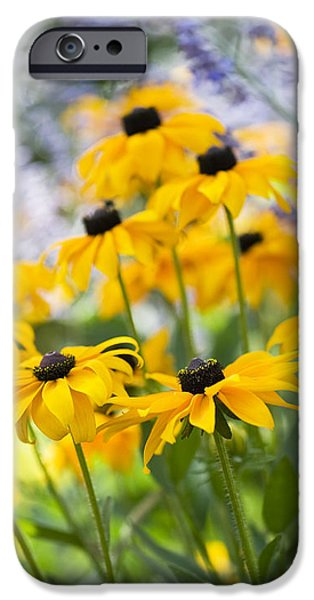 Abstracted Coneflowers iPhone Cases - Rudbeckia Fulgida Goldsturm iPhone Case by Tim Gainey