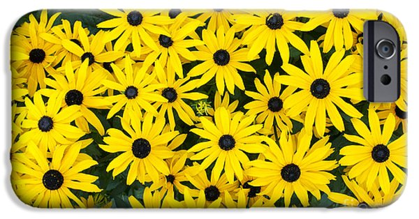 Abstracted Coneflowers iPhone Cases - Rudbeckia Fulgida Pot Of Gold  iPhone Case by Tim Gainey