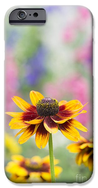Abstracted Coneflowers iPhone Cases - Rudbeckia Hirta iPhone Case by Tim Gainey