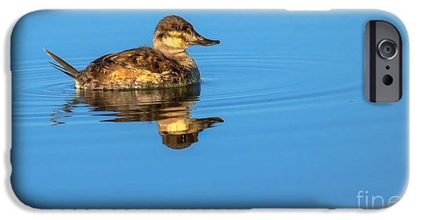 Haybale iPhone Cases - Ruddy Duck iPhone Case by Robert Bales