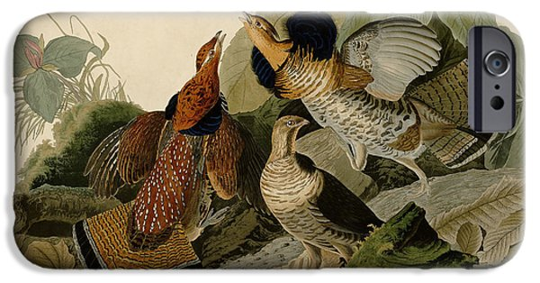 Wild Life Drawings iPhone Cases - Ruffed Grouse iPhone Case by Celestial Images