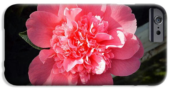 Camellia iPhone Cases - Ruffles In Pink. iPhone Case by Terence Davis
