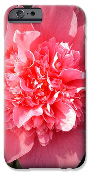 Ruffles In Pink. iPhone Case by Terence Davis